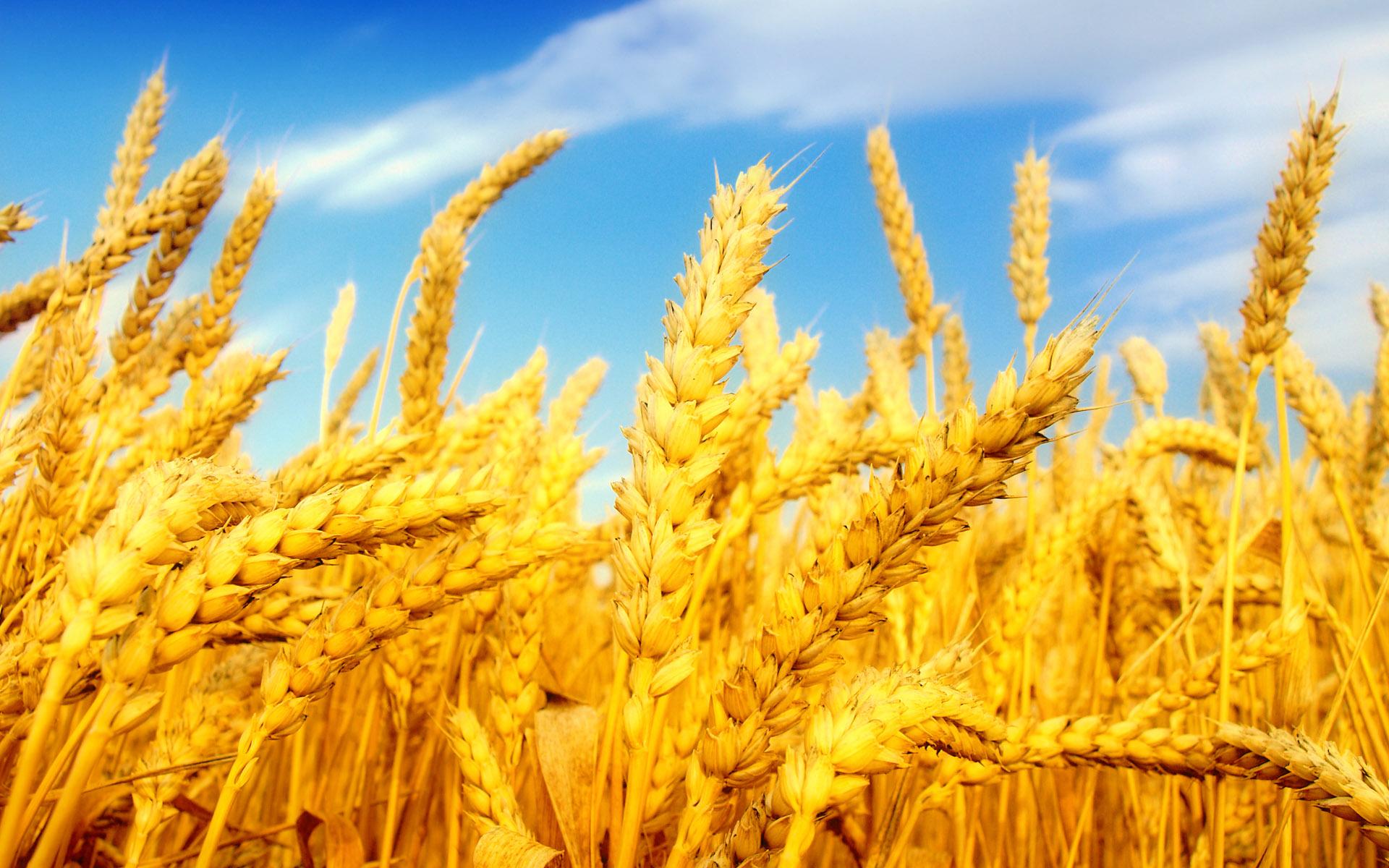 Приднестровье урожай 2014